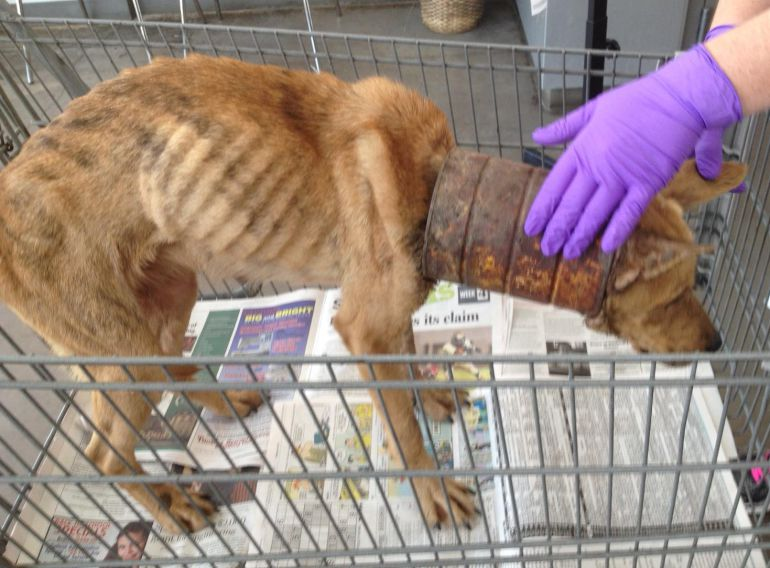 Encontraron 35 perros encerrados en un departamento.