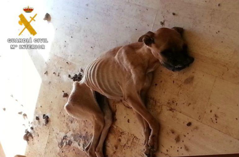 Imagen de la perra encontrada por los agentes en Cigales