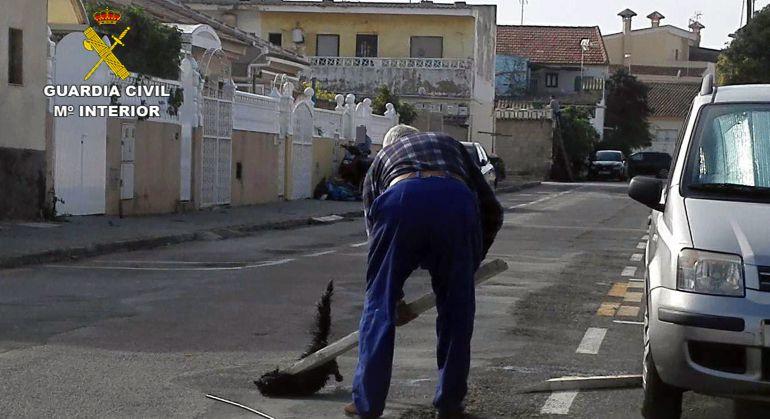 Imputado por matar un gato a golpes