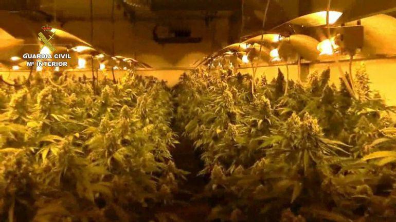 La luz se va por los cultivos de marihuana radio for Cultivo interior marihuana