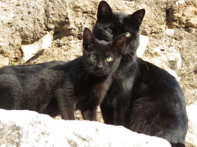 Gatos callejeros en el Templo Romano de Claudio Marcelo