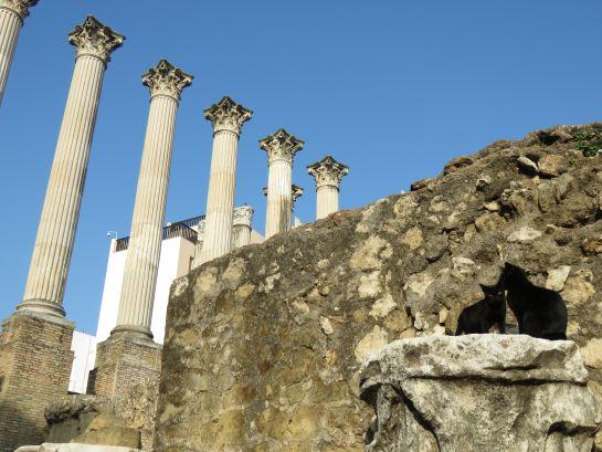 Los gatos del Templo Romano se han convertido en una atractivo más para los turistas