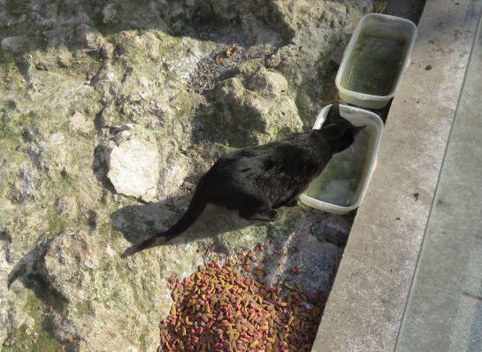 Vecinos y amigos de los animales les proporcionan comida y agua fresca