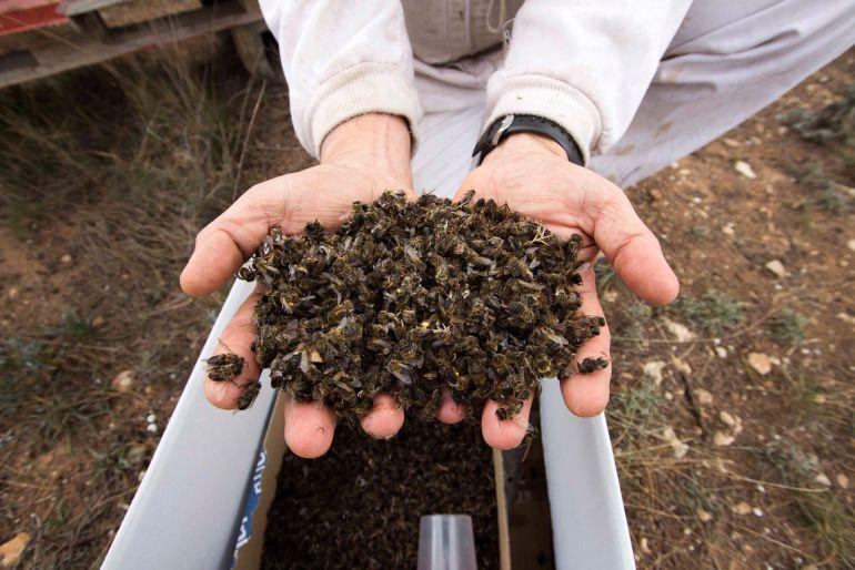 Greenpeace alerta de la mortandad de abejas a causa de los plaguicidas