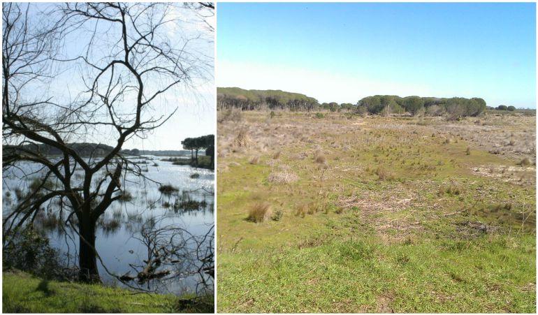 Antes y después de la laguna del Acebuche, en Doñana
