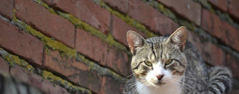 Gato descansando sobre un tejado
