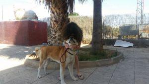 Sandra besa a su fiel perra Maya de camino a Barcelona