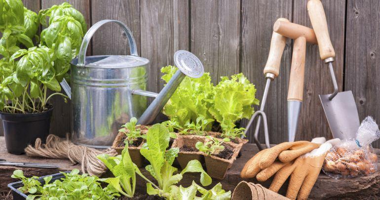 Las parcelas tendrán que ser cultivadas de manera ecológica y para el autoconsumo