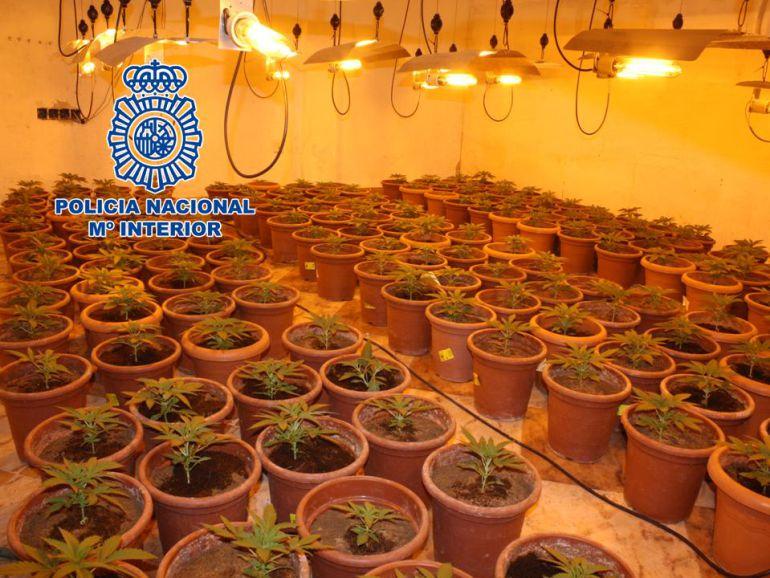 Plantación interior de marihuana desarticulada en Granada