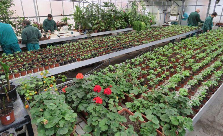 Centro sociosanitario hermanas hospitalarias palencia for Formacion jardineria