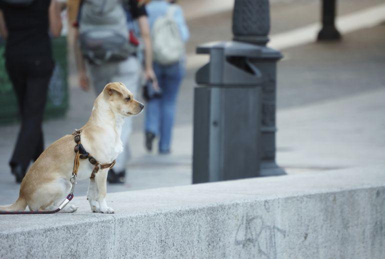 Málaga, ordenanzas municipales, perros,: Este lunes comienza el periodo de alegaciones a la ordenanza de animales