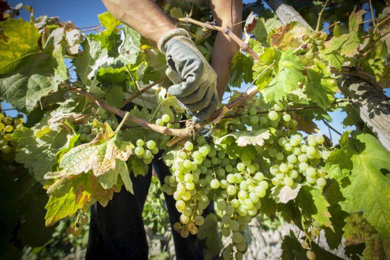 Imagen de una viña del Marco de Jerez