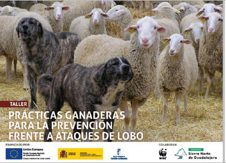Se celebra en Guadalajara un taller para la coexistencia del lobo y de la ganadería: Se celebra en Guadalajara un taller para favorecer la coexistencia del lobo y de la ganadería