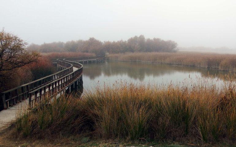 El CSIC revela que la contaminación de las aguas afecta negativamente a las Tablas de Daimiel