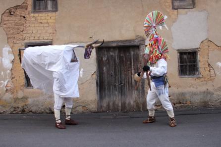 Toro y guirrio en Carrizo de la Ribera