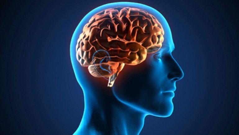 Descubre esta semana los misterios del cerebro