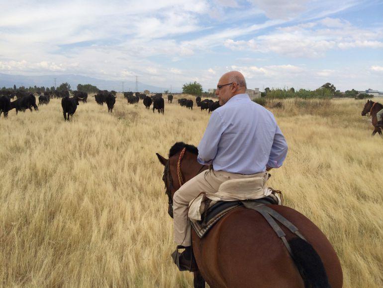 El ex consejero de Agricultura, José Antonio Echávarri, a caballo sobre un pastizal extremeño. (Archivo)