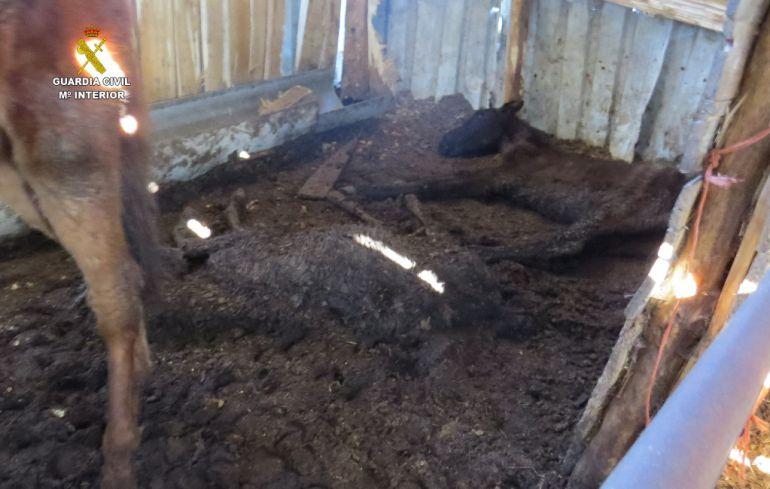 Investigan a un joven de Villazala por dejar morir de hambre a tres caballos