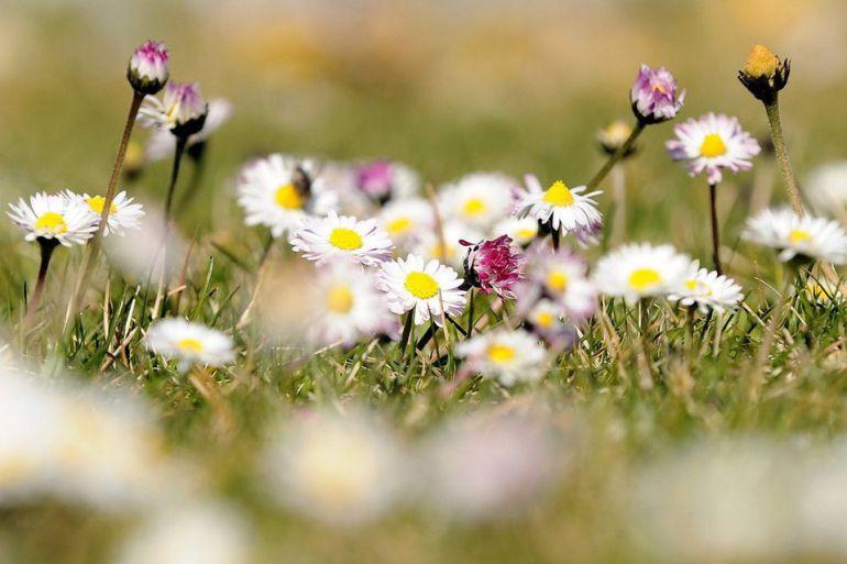 La llegada de la primavera favorece el crecimiento de la vegetación