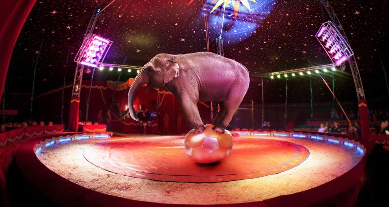 Un elefante en un circo