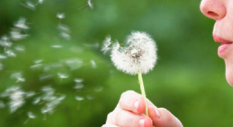 La primavera de este año tendrá menos polen y otros alérgenos en suspensión