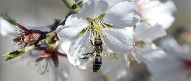"""Las alergias serán """"moderadas"""" esta primavera en Castilla-La Mancha"""