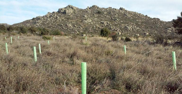 Una de las reforestaciones llevadas a cabo por Reforesta en 2016