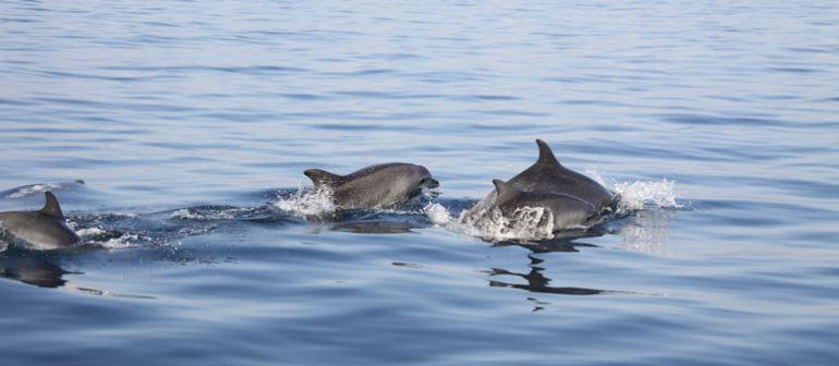 Dofins i balenes a tocar de la platja