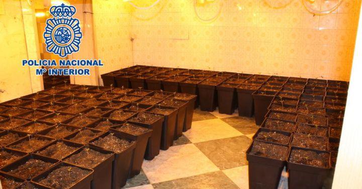 Granada otro vivero de marihuana donde se robaba luz for Viveros en granada