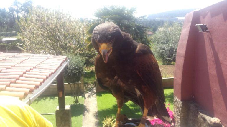 LA UMIR rescta a un águila herido