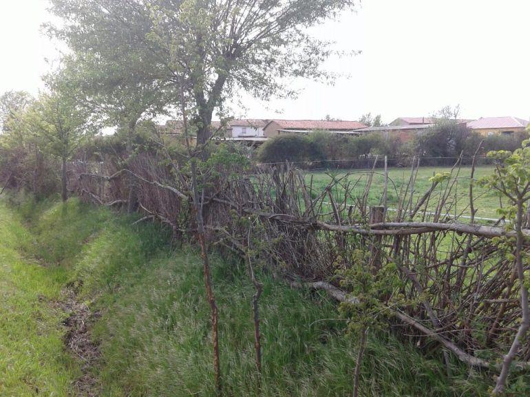 Imagen de una sebes en la comarca de La Sobarriba