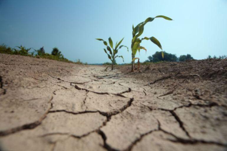 El Ministerio de Agricultura tramitará la declaración de sequía para la cuenca del Duero