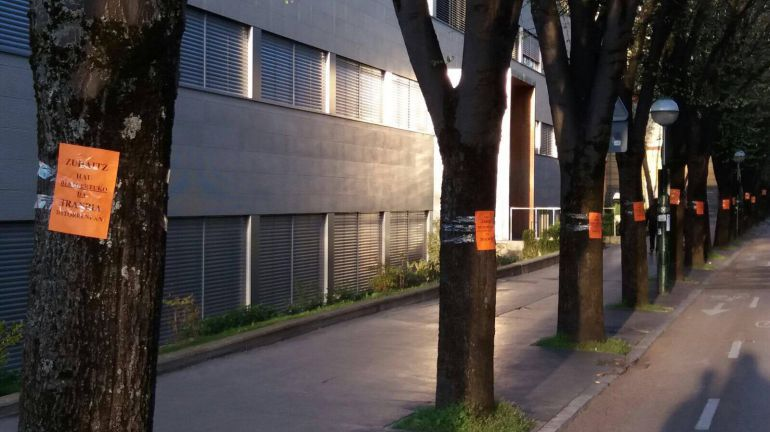 """La plataforma """"TranvíaNOtaldea"""" lleva más de dos semanas pegando en el vecindario de Adurza y San Cristóbal carteles en los que se lee """"Este árbol desaparecerá cuando llegue el tranvía"""""""