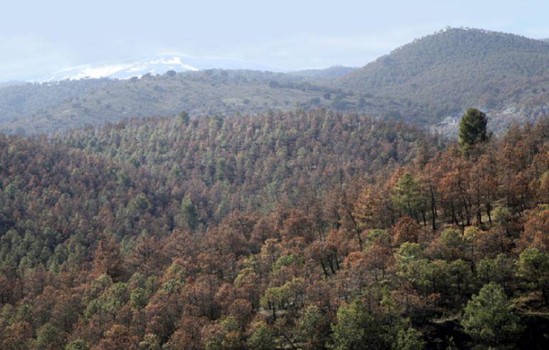 Panorámica en la Sierra de Baza