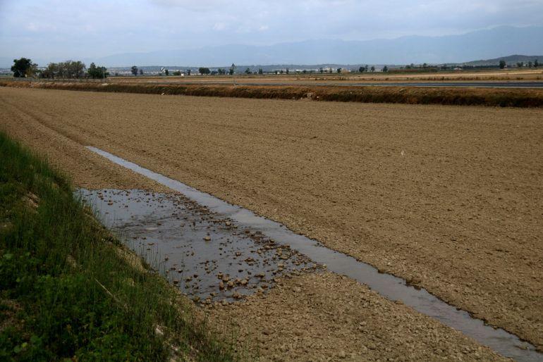 L'aigua comença a entrar en un camp d'arròs del delta de l'Ebre.