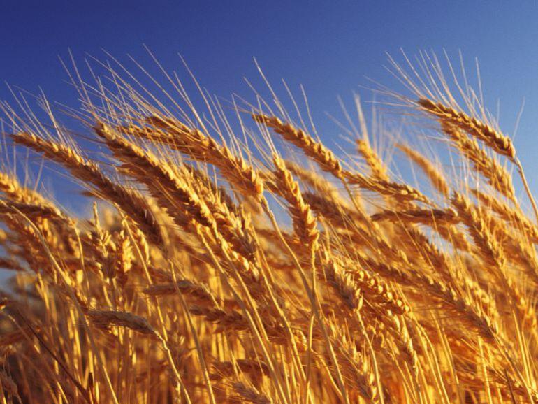 El estrés hídrico amenaza los cultivos manchegos