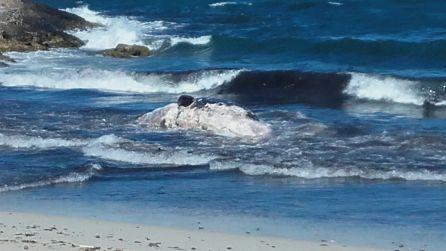 Las corrientes y el oleaje han llevado el cuerpo hasta la costa