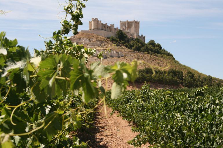 El castillo de Peñafiel sobre viñedos de la Ribera del Duero
