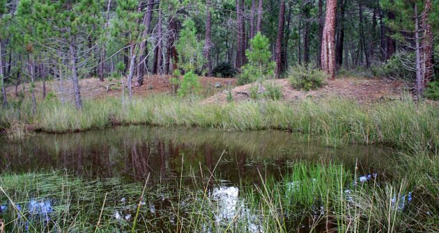 Esta laguna es una isla de diversidad biológica.