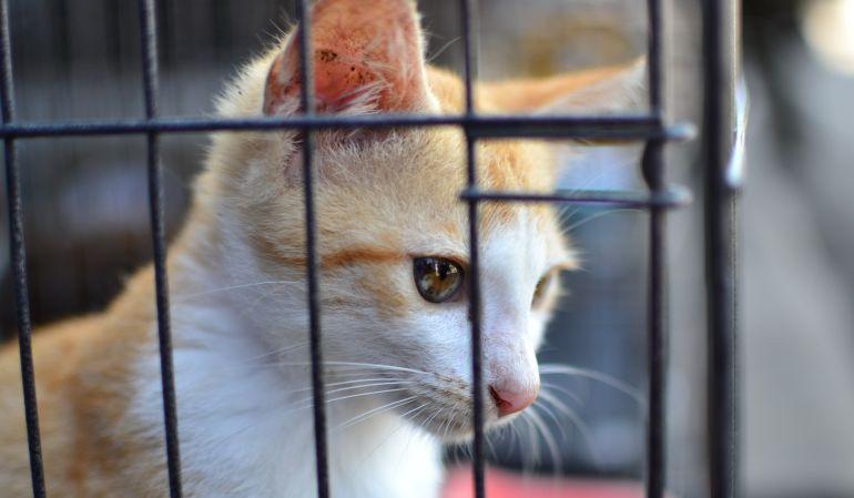 El Centro Integral de Protección Animal de Alcorcón no se privatizará