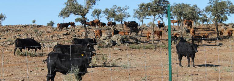 La Diputación de Toledo vende la ganadería de reses bravas que compró el PP