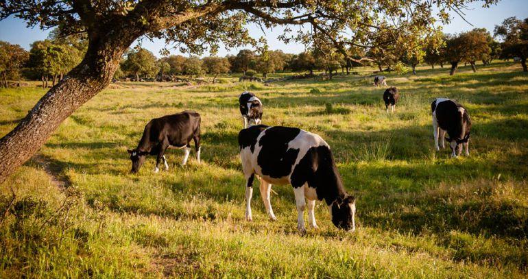 Covap busca agricultores sostenibles