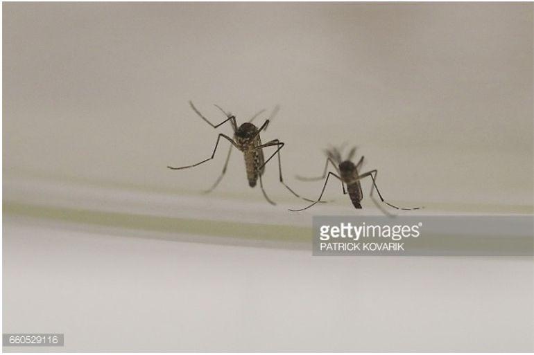 Los mosquitos protagonistas en las ferias de San Isidro de Talavera