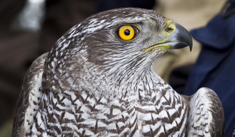 10 crías de ave fueron detectadas en la zona del valle del Júcar en 2016