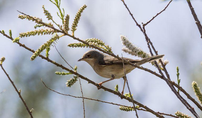 A los asistentes al curso se les enseñará a reconocer las diversas aves urbanas