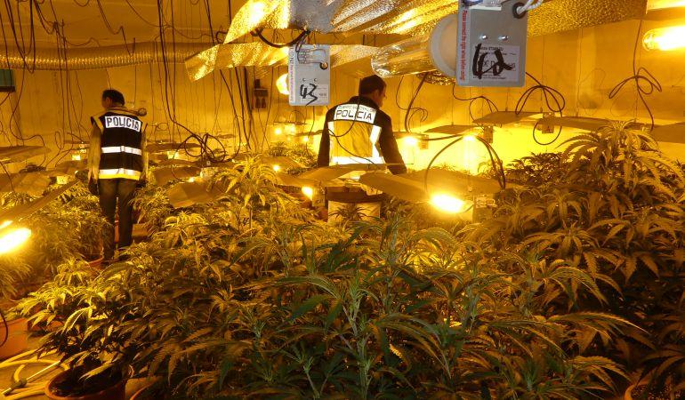 Los agentes registrando la plantación de marihuana en Segovia