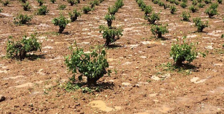 El pedrisco daña los cultivos de la Mancha conquense de forma irregular
