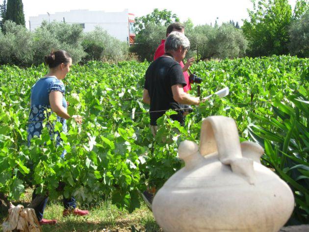 Francisco Robles atendiendo a los invitados a visitar el viñedo