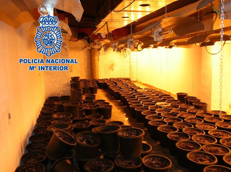 26 detenidos en la Región por cultivar marihuana y comercializarla en Europa