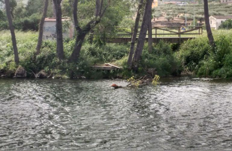 Río Jerte a s paso por la Isla en Plasencia
